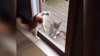 Две стороны кошек прекрасно представлены в этом видео