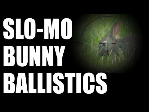 Long range rabbit shooting – graphic images – age restricted