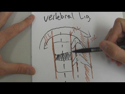 Cosa fare con ernia intervertebrale nella parte bassa della schiena