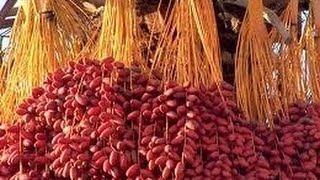 يا بلح لونك أحمر زي دم غزير روى أرضنا -رالنيروز-راس السنة القبطية-Bekhit Fahim