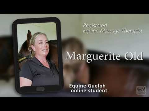 From Desk Job to Horse Massage. Thanks, Equine Guelph for ...