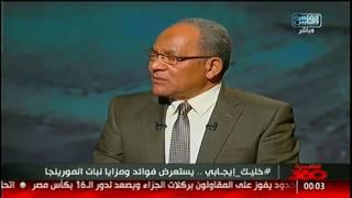 القاهرة 360 | لقاء مع د.أبوالفتوح عبدالله حول فوائد نبات المورينجا