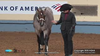 2020 AQHA Select Performance Halter Stallions