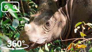 Up Close With The World's SMALLEST Rhino | VR 360 | Seven Worlds, One Planet