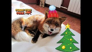 Happy New Year 2019 from Funny Foxy