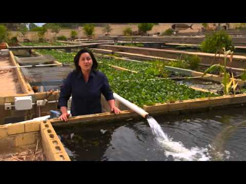 Splosht Bacteria - Keeping Your Pond Clean