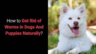 How to Get Rid of Worms in Dogs And Puppies Naturally?