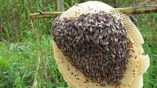 Thăm bẫy khu vực chim, hốt 2 tổ ong ăn tại chổ bị ong chít và con cò tới số | Săn bắt SÓC TRĂNG |