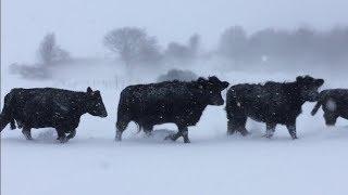 Managing Extreme Weather: North Bellshill Farm