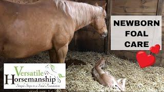 Newborn Foal Care + Complication With Our Mare // Versatile Horsemanship
