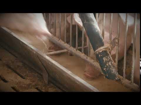 Schwein konventionell - Fütterung