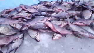 Карпстрим / Зимняя рыбалка / Конаково - январь / Лучшие оснастки для ловли леща и подлещика