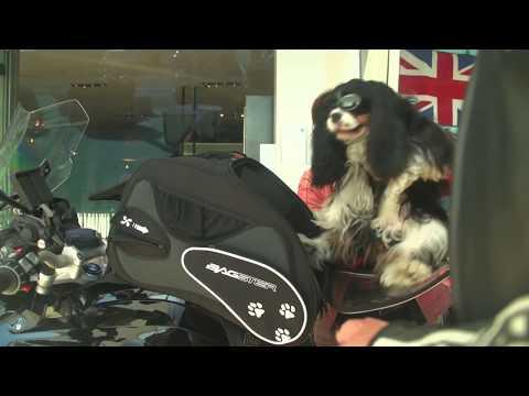 Puppy Bagster, borsa trasporto cani per moto!