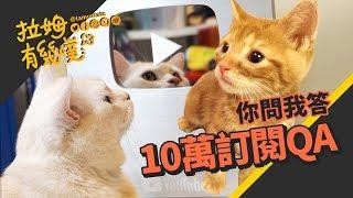 Lamuncats Q&A|LAMUNCATS ♕