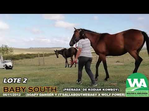 Lote BABY SOUTH