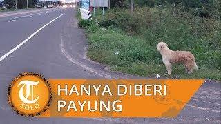 Viral Anjing Ditinggalkan Pemiliknya dan Hanya Diberi Payung dan Bantal