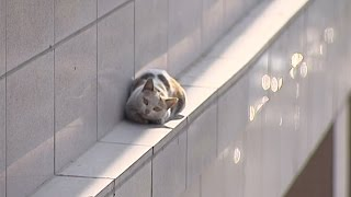 Watch: Cat makes dramatic jump from second floor, lands on feet
