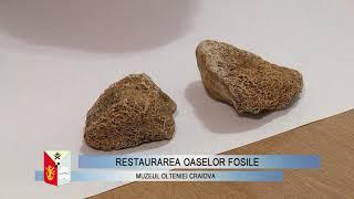 Restaurarea oaselor fosile