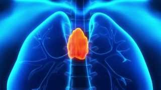 Stress and the Thymus Gland