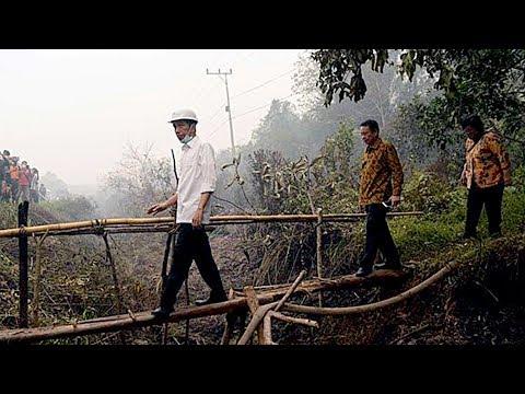 Penampakan Bukit Soeharto Kaltim, Calon Ibu Kota RI yang Ditinjau Jokowi Hari Ini