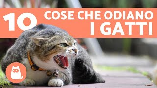 10 cose che i gatti odiano