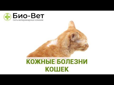 Кожные болезни кошек. Ветеринарная клиника Био-Вет.