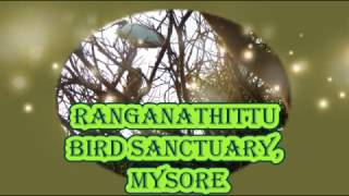 Ranganathittu Bird Sanctuary Mysore | Tourist Places to Visit in Bangalore