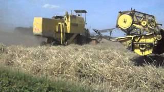 moisson du blé battage harvest avec 2 moissonneuses batteuses Clayson M133 à Estaires 59 Nord