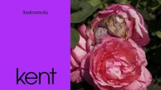 "Video thumbnail of ""Kent - Andromeda (Official Audio)"""
