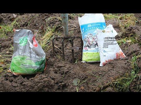 Кислотность почвы и её влияние на растения
