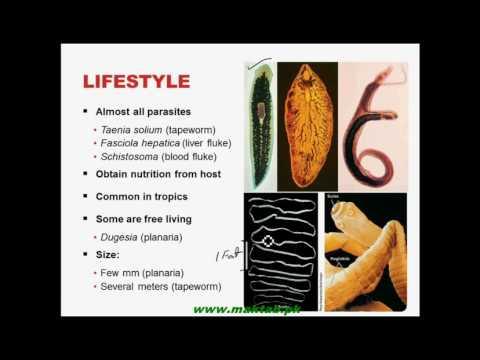 A mikroorganizmusok és paraziták fő csoportjai