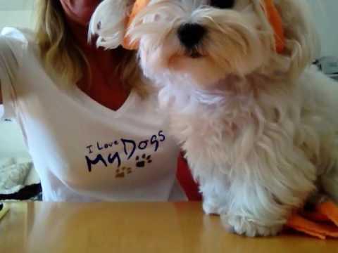 Last Minute - Hunde Mütze selber machen ohne Nadel und Faden :-)