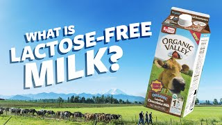 What Is Lactose Free Milk? | Ask Organic Valley