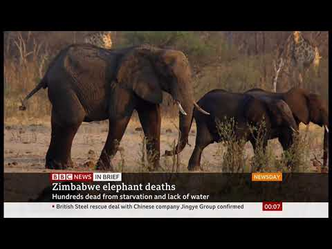 Elephants lack of water due to drought (Zimbabwe) - BBC News - 12th November 2019