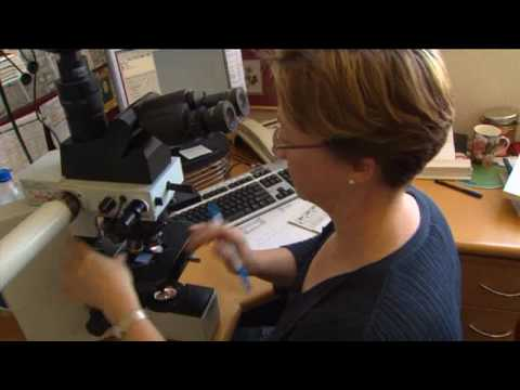 Day In The Life - Anatomical Pathology - Dr Adrienne Morey