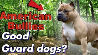Are American Bully's Good GUARD Dogs? Or Just Show Dogs?