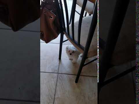 Oona playing inside.