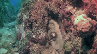 preview picture of video 'HD Scuba USVI - St Thomas Diving Club'