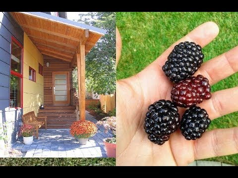 SIMPLE&Easy-- RASPBERRIES/BLACKBERRIES @Home