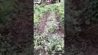 Thăm Bẫy Rắn Ngày Cuối Tuần Mưa Bão! Snake Trap On The Rainy Season (Raining Cats And Dogs)!