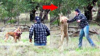 MOST SHOCKING ANIMAL ATTACKS - Shocking Animal Attacks Caught On Camera!