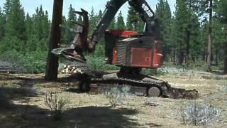 Timbco Cutting big trees