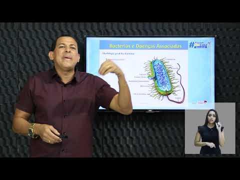VÍRUS E REINOS (BACTÉRIAS E ARQUEAS, ALGAS E PROTOZOÁRIOS, FUNGOS): BACTÉRIAS E ARQUEAS