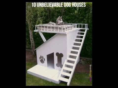 10 Unbelievable Dog Houses