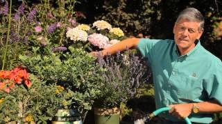 The Best Time to Water Garden Plants : Garden Savvy