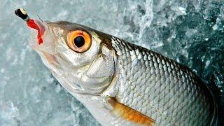 Какая прикормка нужна для зимней рыбалки на плотву