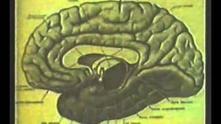 НаучФильм. Головной мозг.