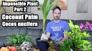 Update on Impossible Plant (Coconut Palm)