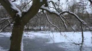 Stina Nordenstam - Winter Killing lyrics