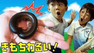 虫 いっぱい 動画!おもしろい・かわいい・怖い!昆虫博物館にいく仲良し兄弟 Brother4
